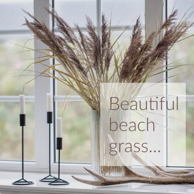 Beautiful beach grass…